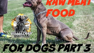 dog raw fed diet food PART 3  pit bull muscle bully conditioning body building