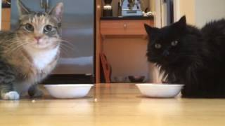 Our cats have good appetite