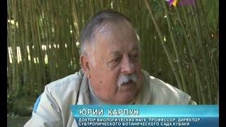 """""""Субтропический ботанический сад Кубани"""" отметил своё сорокалетие"""