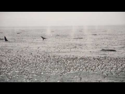 Whale Watching In The Bering Sea
