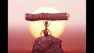 Как работают муравьи | Жизнь муравейника