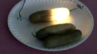 pickle experiment