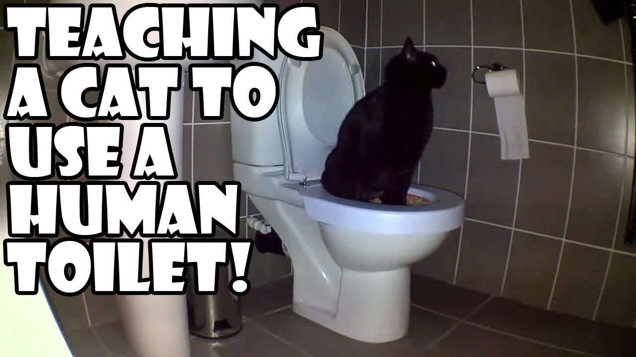 Teaching A Cat To Use A Human Toilet Youtube