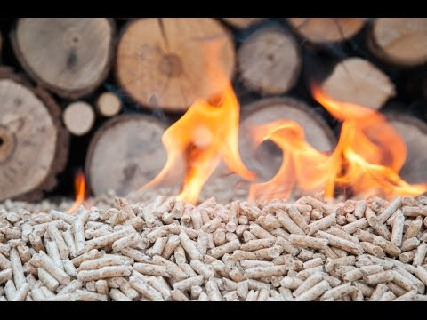 Breaking down biomass, part one | Sustainable Energy