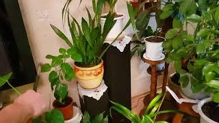 видео Уход за растениями