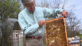 Queen of the Sun: What Are the Bees Telling Us? (2010) - Official Trailer [HD]