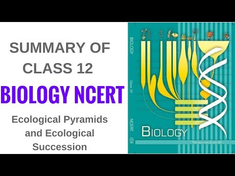 Summary of Biology NCERT Class 12- Ecological Pyramids and Ecological Succession thumbnail