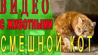Кот на лестнице. Тренировка кота на лестнице. Смешное видео. Кот кувыркается. Ржач