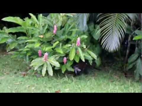 Seeking out Mona Monkeys in Grenada