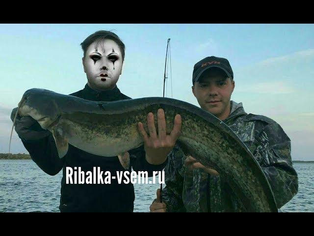 Хорошая рыбалка на сома на квок на Волге в Астраханской области