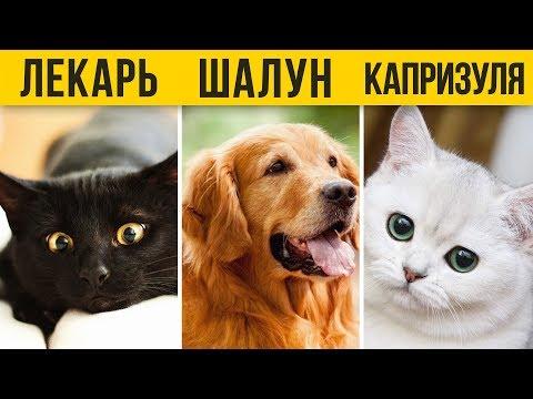Что окрас собаки или кошки расскажет о характере вашего питомца