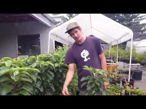 Tour of One Green World Nursery in Portland, Oregon - Presented by OneHeartfire