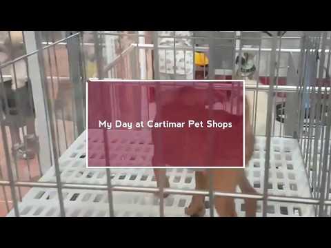 My Day at Cartimar Pet Shops | Manila