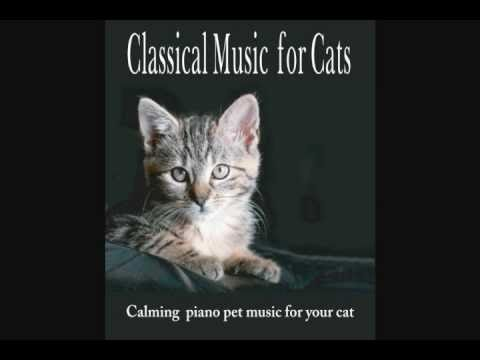 Classical Music for Cats – Calming piano pet music for your cat