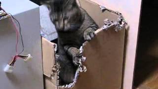 荒ぶる猫。 もうすぐ我が家が崩壊す。 (ダンボールハウス)