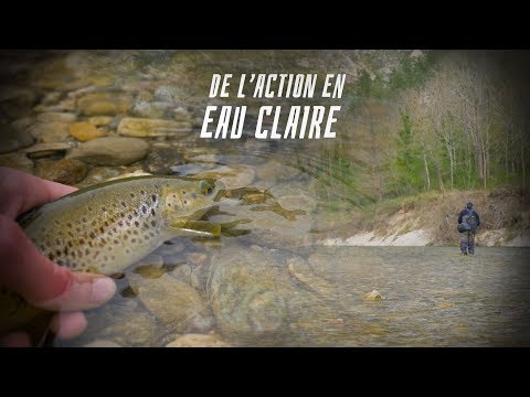 De L'action En EAUX CLAIRES ! Pêche En Grande Rivère