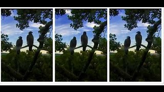 freedom liberty a visitor scared us aef dceaglecam org