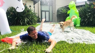 DOG PLAYS ON SLIP AND SLIDE