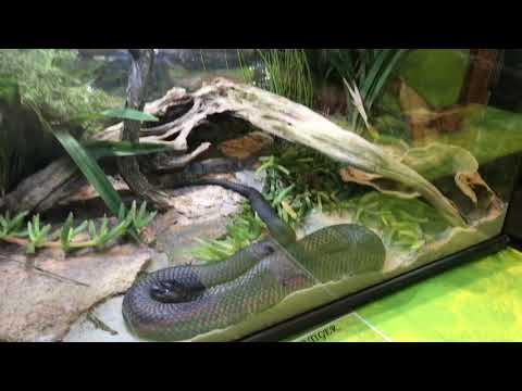 Melbourne reptile expo