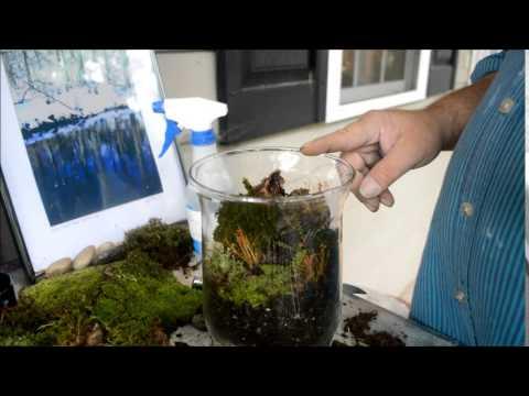 How To Make Miniature Rainforest Landscape
