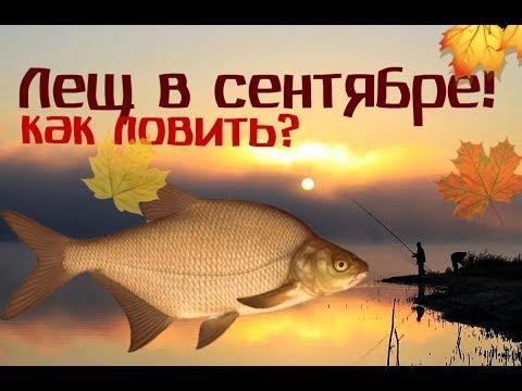 Как и на что ловить леща в сентябре? Секреты ловли леща в сентябре!