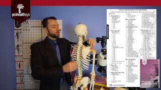 How many bones & joints in the body? What is joint popping? with Dr Vizniak