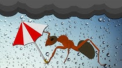 Why Do Some Bugs Only Show Up When It Rains?