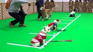 「DOG!フェスタ」 inキラメッセぬまづ 我が家の愛犬 フレンチブルドッグ...