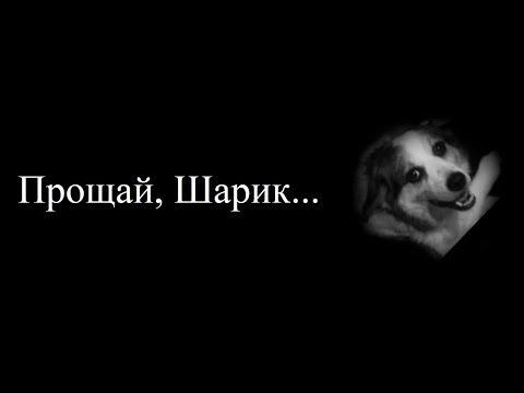 Прощай, Шарик... (Клип)   Vredina Life, Хомки - Шарика сбила машина