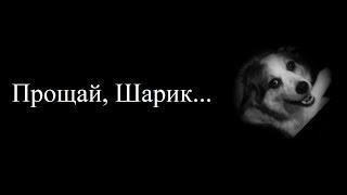 Прощай, Шарик... (Клип) | Vredina Life, Хомки - Шарика сбила машина
