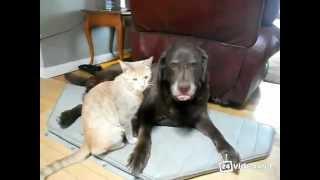 Кот и пёс, друзья на веки.