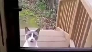 Смешное видео про животных 1