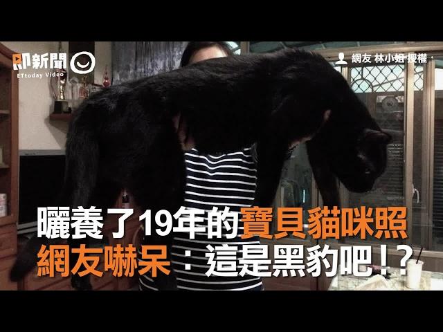 曬養了19年的寶貝貓咪照 網友嚇呆:這是黑豹吧!?