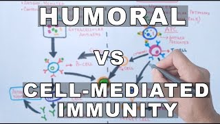 Humoral and Cell Mediated Immunity