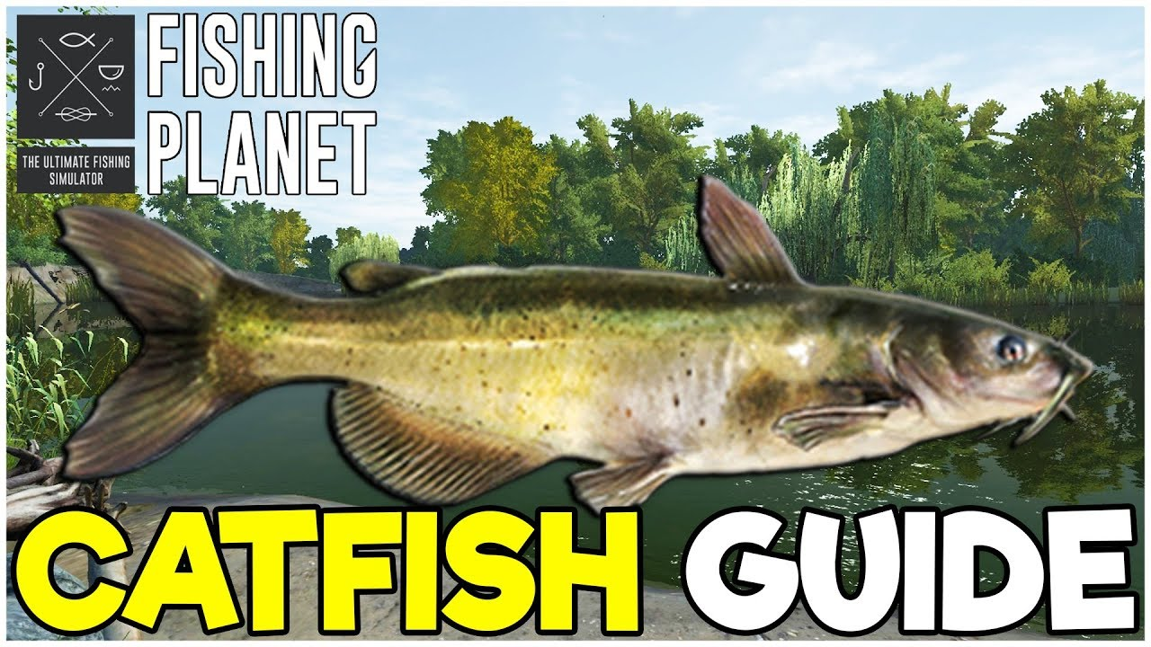 CATFISH Fishing Guide! - Fishing Planet Tips