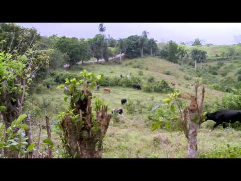 Domincan Republic Projects: Complete Video