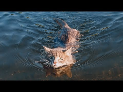 Funny Cats Love Water Compilation (2018)