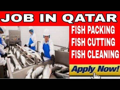Job In Qatar | Seafood Company Job In Qatar |fish Packing Job In Qatar|fish Packing,cutting,cleaning