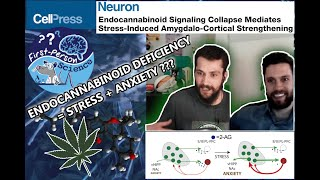 How Do EndoCannabinoids Buffer Stress? Cannabinoid Collapse Causes Synaptic Strengthening. FPS #6