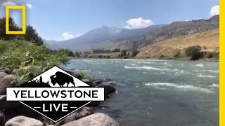 Relaxing Yellowstone River LIVE! | Yellowstone Live