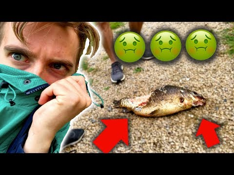 Who Killed This Fish?!