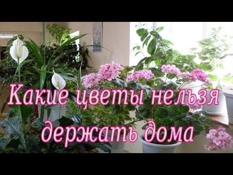Какие цветы нельзя держать дома и почему?