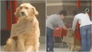 this-dog-was-sat-all-alone-outside-target-then-people-looked-closer-at-the-sign-around-his-neck