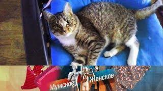 Мужское / Женское - Ход котом. Часть 2. Выпуск от 02.04.2018