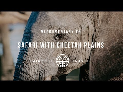 Safari with Cheetah Plains - Vlogumentary #3