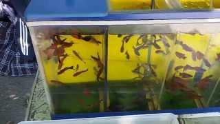 Аквариумные рыбки в переноске(Купить или продать аквариумных рыбок можно на форуме аквариумистики http://aquarium-vl.ru/forum/index.php., 2015-07-05T07:23:34.000Z)