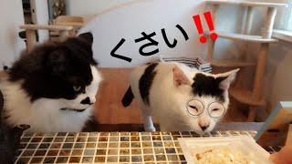 猫が納豆の匂いを嗅いだら?【今日のニャンコ】その30 thumbnail
