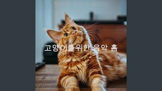 흠없는 고양이 훈련의 노출