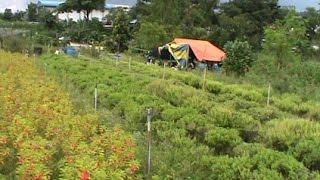 Malaysian urban Farm