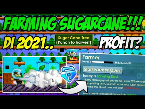 How to get daily 1-2 dl with sugarcane farm🤑(Easy profit🤑) |Growtopia